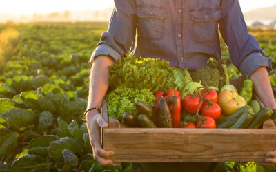 Plant-based agriculture conversion: Sustainability and development