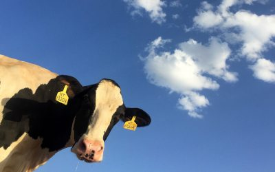 The dairy industry in Scotland is in full decline