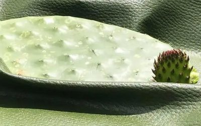 Vegan leather made from Mexican cactus
