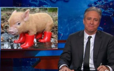 Getting to know pigs turned Jon Stewart vegan