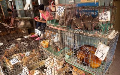 Chinese want permanent ban on wildlife markets