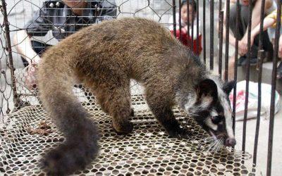 Coronovirus exposes the scale of the wildlife farm industry
