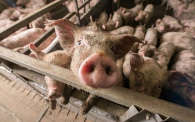 COVID-19: The Horrific Exploitation of Animals Must End