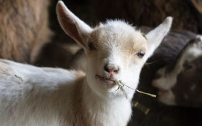 Working with farm animals: When you don't want to face the truth