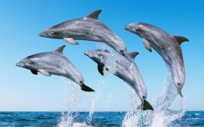 Boycott Fish to Save Hundreds of Dolphins