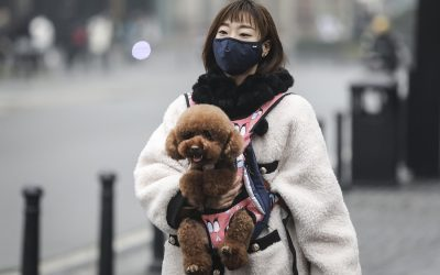 Thousands of Pets Abandoned, Killed in China Amid Coronavirus Fears