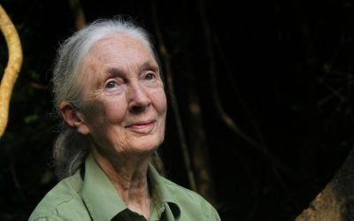Jane Goodall Urges Public to be Conscious Consumers