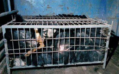 The Bear Bile industry is an abomination and does not treat coronavirus