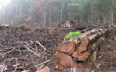 Deforestation in the Amazon: A Recipe For Our Next Pandemic