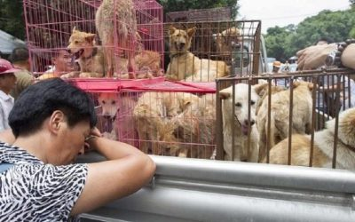 Is This The End of Dog Meat in China?