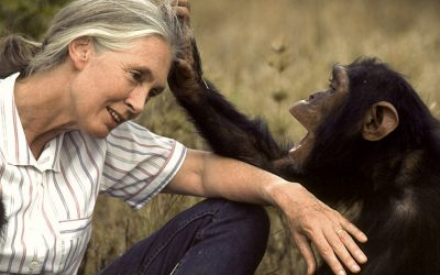 Jane Goodall says we must protect animals to protect the environment and our own future