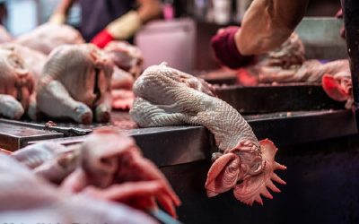 NYC Live Animal Markets: A Disease Death Trap