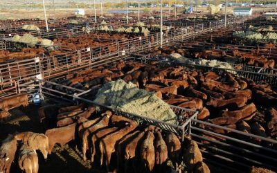 Montana's Youth Sue State For Promotion of Fossil Fuels but what about Animal Agriculture?