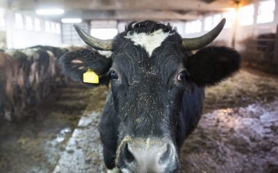 Humane Society Sues USDA Over Meat Industry Disease Risk