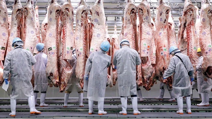 """Meat-plants in """"disastrous race to the bottom"""" in the quest for cheap meat"""