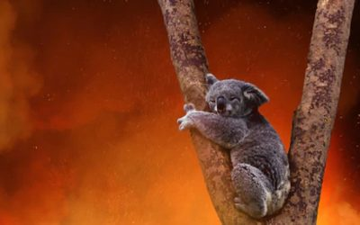 Impact of Australian wildfires worse than thought say scientists