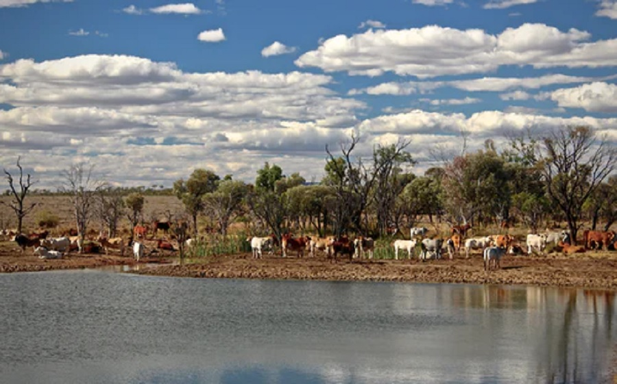 Cow farming is destroying Colorado's water sources