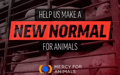 Animals ask for a new normal in this Mercy For Animals video
