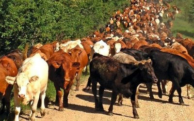 Replacing livestock products with plant alternatives best strategy to reversing climate change