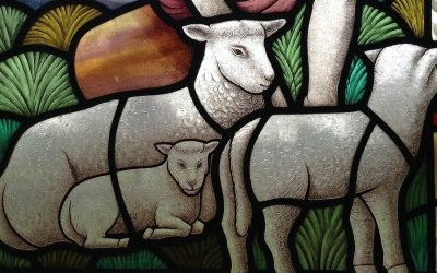 Churches asked to advocate for better animal welfare in farmed animals