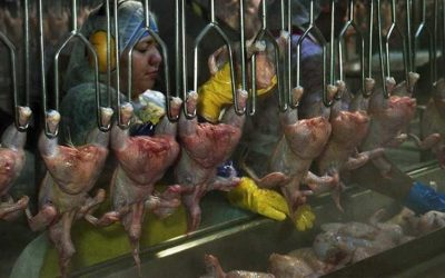 New USDA secretary must ensure COVID-19 health restrictions for workers at meat plants