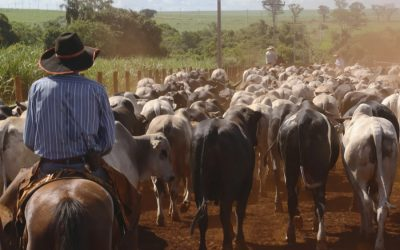 Workers on Brazil's beef farms kept in slavery-like conditions