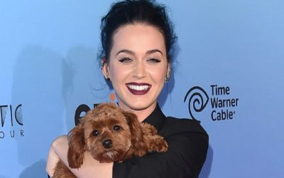 Katy Perry announces going vegan along with her dog in controversial tweet to fans