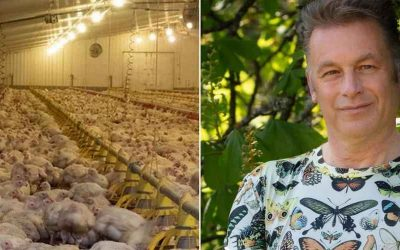 """Chris Packham wants better treatment of chickens saying supermarkets are """"selling suffering"""""""