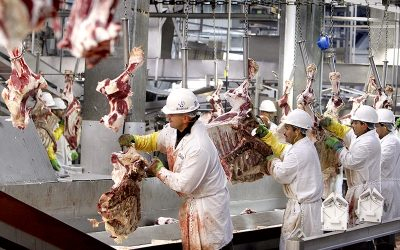 Biden must make the elimination of factory farming a priority