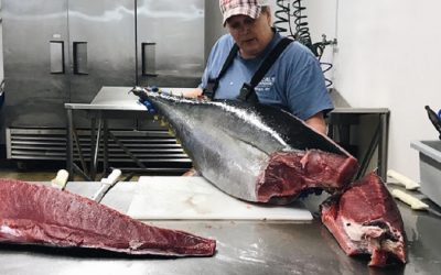 Campaign calls for action to protect tuna from overfishing