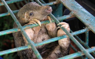 WHO calls for ban on live animal markets to prevent pandemics