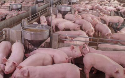 Marginalised communities are paying the price of factory farming