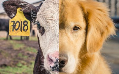 Speciesism is a social justice issue