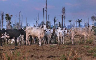 Environmentalists call for an end to meat industry deforestation