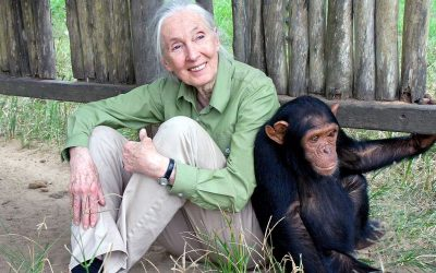 Jane Goodall sends strong warning about future pandemics