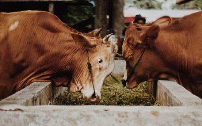 Government should be promoting a meat-free lifestyle to protect the environment