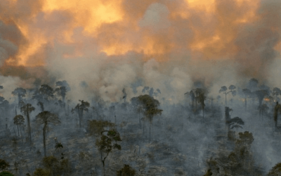 Is the Amazon being turned into a factory for carbon emissions?