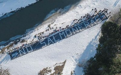 Argentina bans salmon farming in win for campaigners