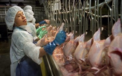 The American meat industry's cruelty cannot be hidden any longer