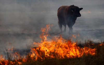 Dependence on animal agriculture is fuelling climate change