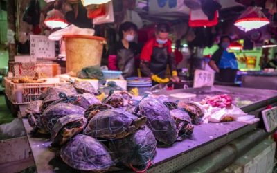 Some disease causing wet markets are incomprehensibly still open for business