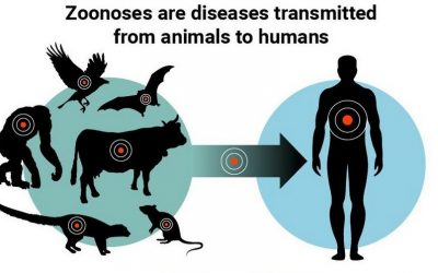 Here's how you contribute to pandemics when you buy and eat animals
